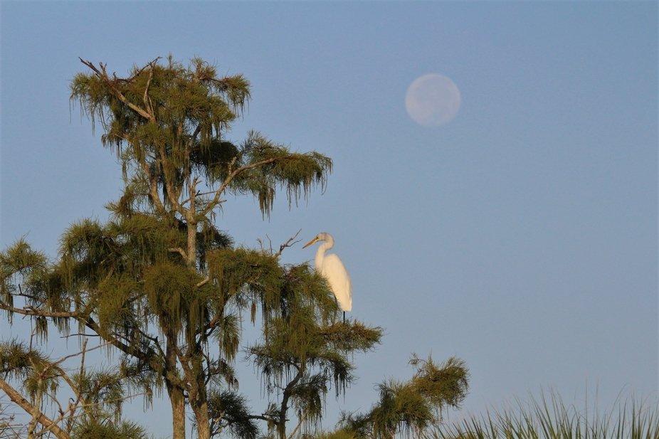 morning Moon and Heron