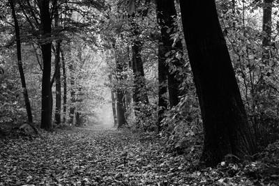 Black And White Autumn Geijsteren