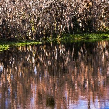 Swamp SJR Reflections