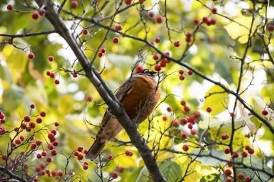 CHICAGO BIRD