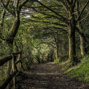 A pleasant woodland path at Portmeirion at the start of Autumn.