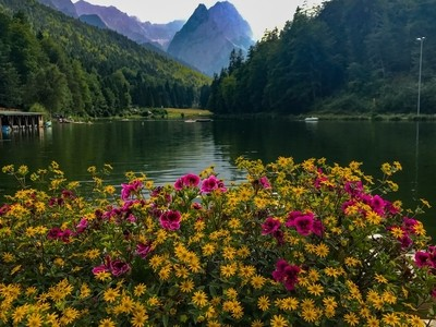 Flowers and Mountain Range
