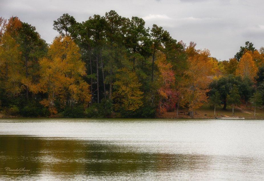 Fall in SC