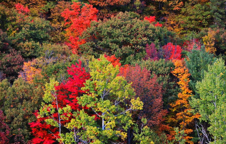 Every year in September, the beautiful Gatineau Hills light up like a Christmas tree. This shot w...
