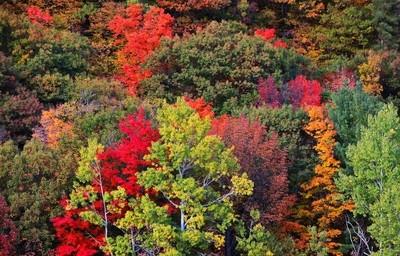 Change of Season - Fall Colours