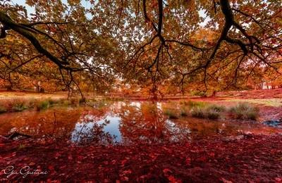 Autumn in Posbank