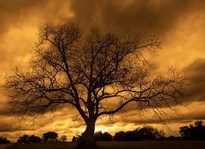 Apocalyptic Sky (2014)