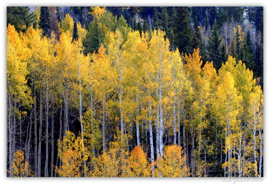 I have this one in a framed version as well. Darker yellows, oranges and some red still cling to the mountain side.