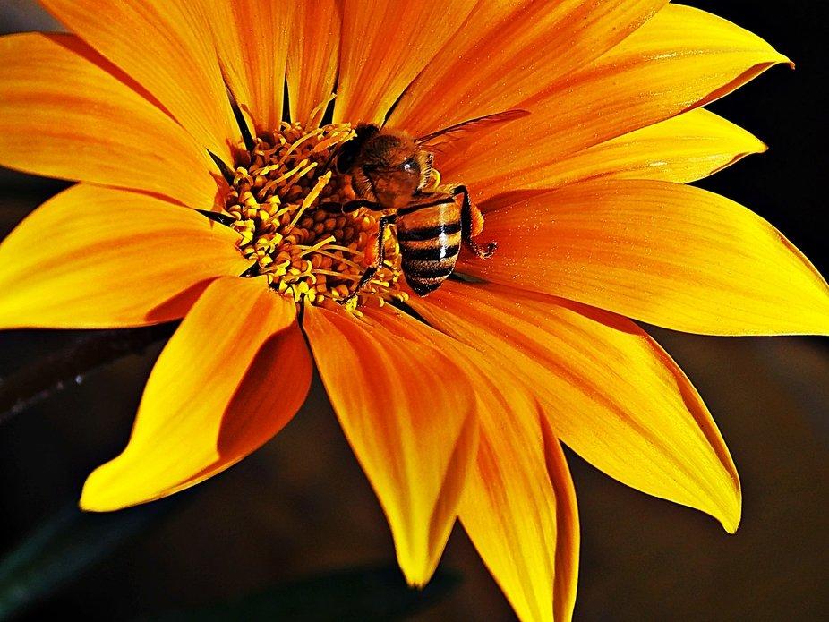 Diariamente, en primavera se cubre de colores! amor este anarajando, con tonalidades amarillas qu...