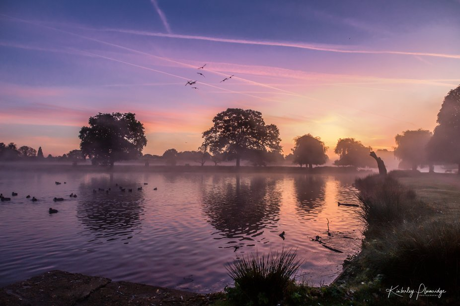 Went to Bushy Park for the rutting but the sunrise was awesome - spent the next hour swapping len...