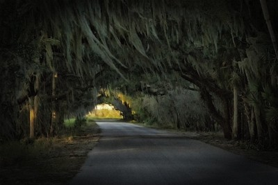 The Myakka River State Park