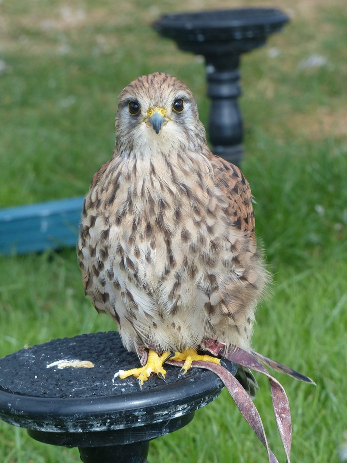 At Wild Wings Birds of Prey centre, Risley
