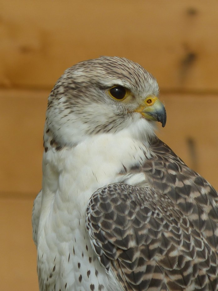 Ar Wild Wings Birds of Prey centre