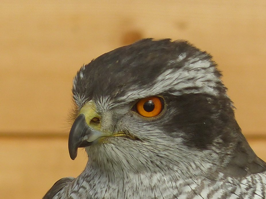 At Wild Wings Birds of Prey centre