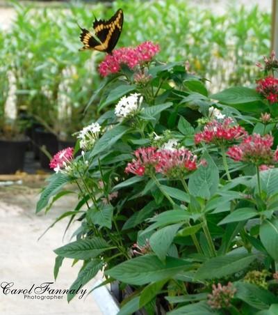 I Love Nectar!