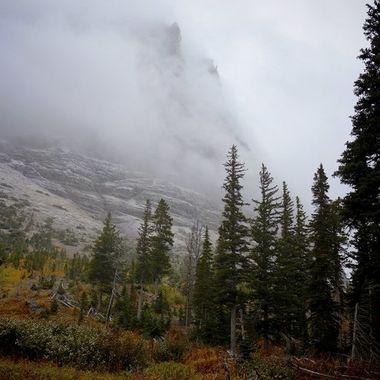 Fog and Fall