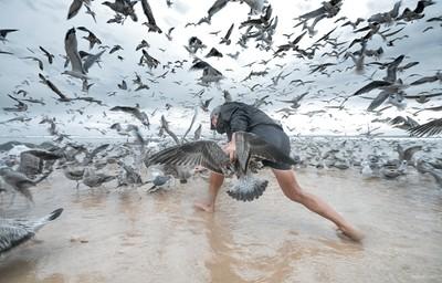birds attack