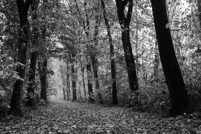 Autumn Funnel Geijsteren