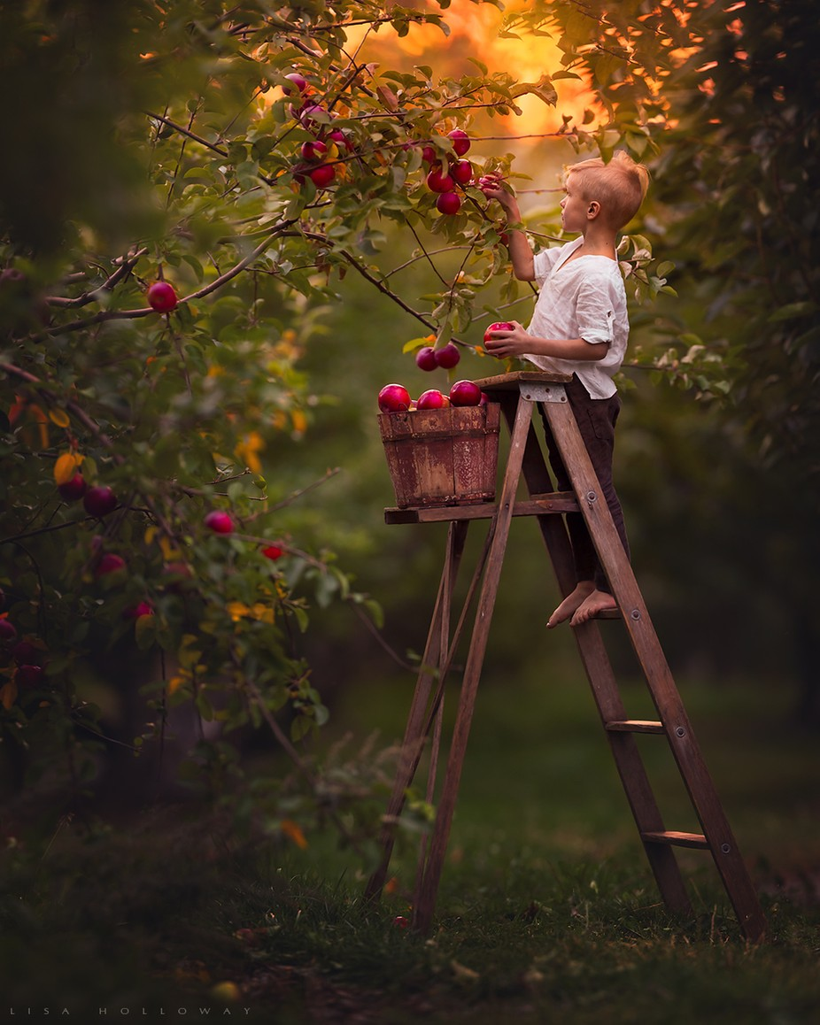 Harvest by lisaholloway - Social Exposure Photo Contest Vol 17
