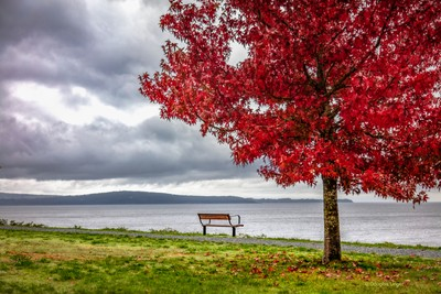 Vacant Bench