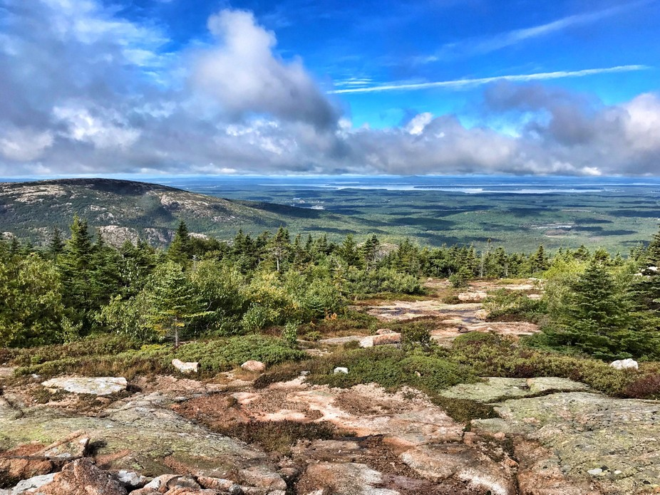 Acadia clearing