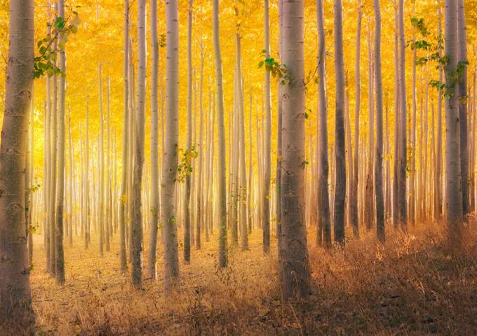 Infinity by maraleite - Tall Trees Photo Contest
