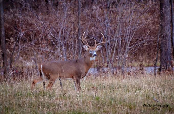 Taken with Nikon D5100 using AF-S Nikkor 70-300mm 1:4.5-5.6 G lens. The interesting thing about this buck is that even though it has a nice spread on its antlers, it would not be a legal buck in Pennsylvania.  It would need to have at least 3 points not counting the brow tines on at least one side.
