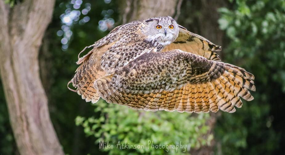 Taken at Walworth Castle Bird Of Prey Centre, Walworth, County Durham on 17/06/2018.