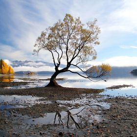 The Wanaka Tree, Lake Wanaka, New Zealand