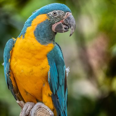 A Macaw in portrait ..