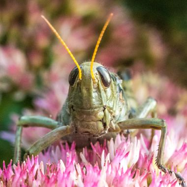 Autumn Grasshopper