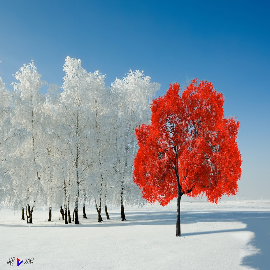 Being Different by french1944 - Creative Landscapes Photo Contest vol3