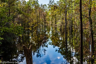 Fall in the swamp