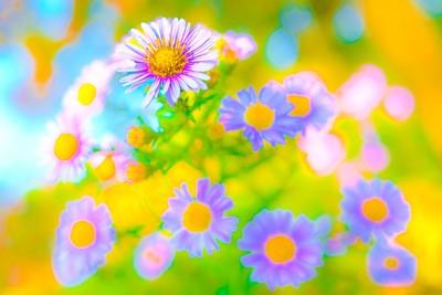 flower-colour-splash-farbspritzer
