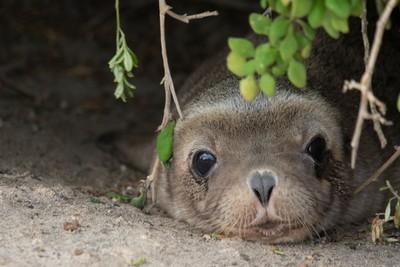 Sea lion pup!