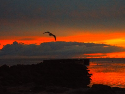 Great Sunrise at wharf with seagull 11002