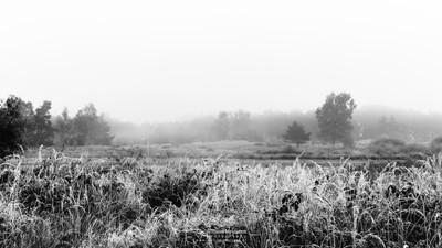 Frosty Rondven Bergerheide
