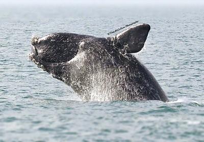 Whale Shot Nikon 7200
