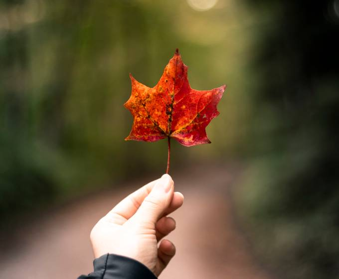 As we embrace fall and take comfort in the warmth of nature and the beautiful spectacle it offers, at the same time we prepare ourselves for the winter which is upon us :)