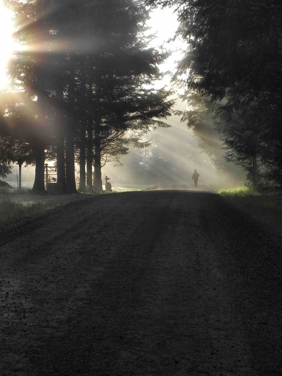This was an accidental shot of my neighbor walking one early morning. I was shooting the Ray's through the trees when she popped out of what seemed like no where!