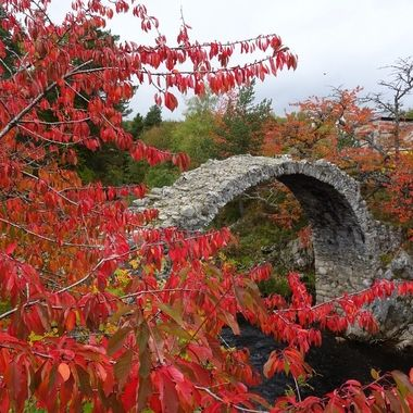 Beautiful colours of Autumn at Carrbridge