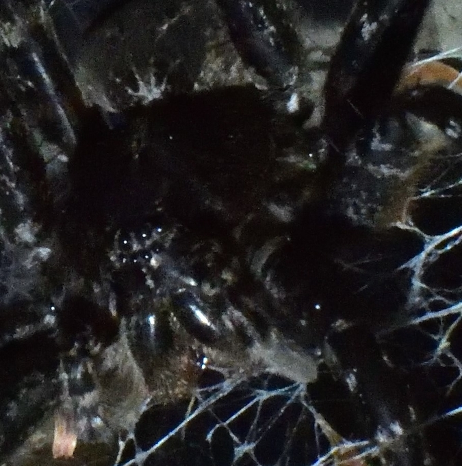 Played with some dock spider photos, thought it may make a cool abstract