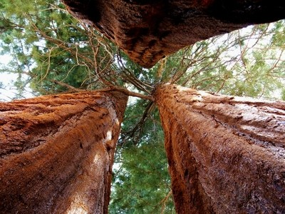 Sequoia and Kings Canyon NP