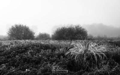 Frosty Grasses Bergerheide