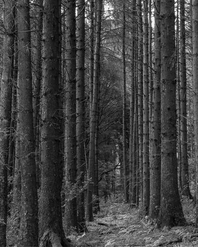 Path through the trees.  #landscapephotography #landscapephotomag #lpm #ukscenery #topukphoto #visualsoflife #lensbible #uk_greatshots #uk_shooters #visualart #thelakelanders #ukpotd #photosofengland #instablackandwhite #blackandwhitephotography #entwistl