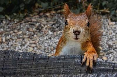Hi, may I interest you in feeding me?