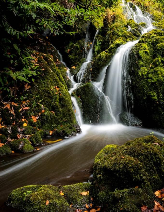 Crawfordsburn Forest Park