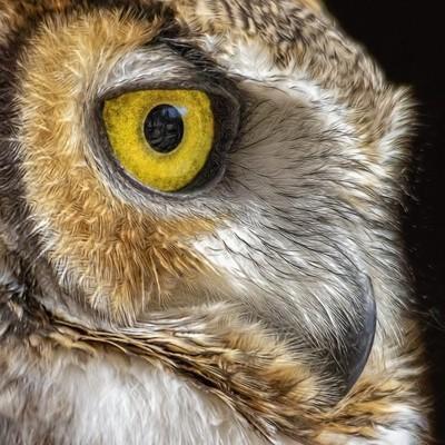 GREAT HORNED OWL EYE