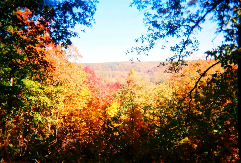 Was lucky enough to find a section of forest high enough for good color along the Natchez Trace P...