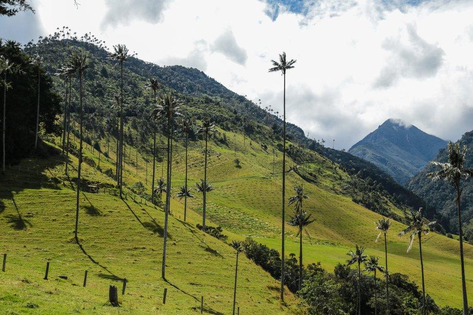 Valle del Cocora_1